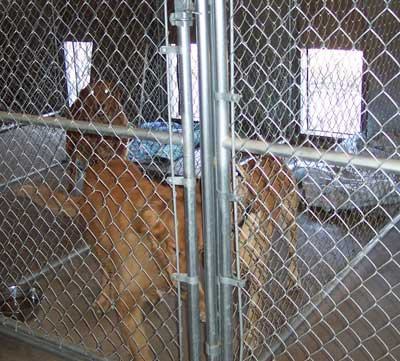 Kennel Rates for Holly's Country Home Kennels